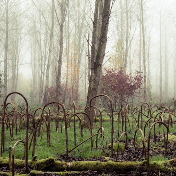melancholy-wood