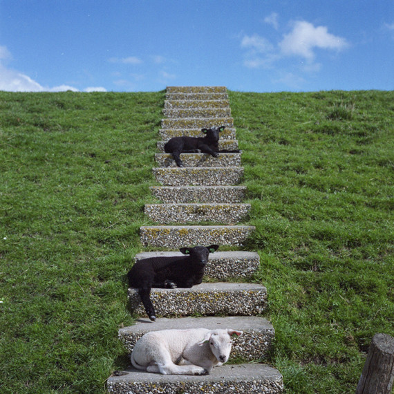 lambs-on-stair